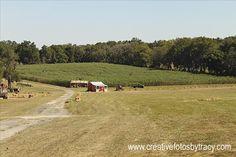 Coon Hollo Farm, Near Gainesville, FL