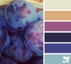 Blueberry hues