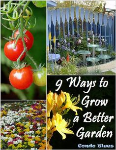 Condo Blues: 9 Ways to Grow a Better Garden 9 Tips and Tricks to Grow a Better Garden. How to plan and plant flowers, landscaping, and vegetables.