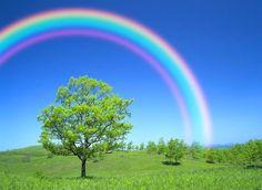 Somewhere over the rainbow. Rainbow Magic, Rainbow Sky, Love Rainbow, Rainbow Bridge, Over The Rainbow, Rainbow Colors, Circle Rainbow, Cura Interior, Rainbow Aesthetic