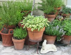 Today's project~ herbs in pots for the patio.