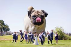 Funny Wedding Photos Puppy Love: How to Include Your Dog in Your Wedding Funny Wedding Photos, Funny Photos, Wedding Pictures, Dog Wedding, Wedding Humor, Dog Breeds That Dont Shed, Wedding Couple Poses Photography, Miniature Photography, Pre Wedding Photoshoot