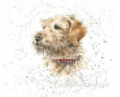 Gorgeous sketch of a beautiful dog. Watercolor Paintings Of Animals, Animal Paintings, Watercolor Art, Different Forms Of Art, Wrendale Designs, Watercolor Techniques, Wildlife Art, Pretty Art, Whimsical Art