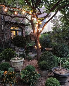 39 amazing backyard ideas on a budget 39 erstaunliche Hinterhofideen mit kleinem Budget 29 39 amazing backyard ideas on a budget ideas - Small Cottage Garden Ideas, Small Garden Design, Garden Cottage, Backyard Cottage, Veg Garden, Small Garden Ideas Shade, Small Topiary Garden Ideas, Vegetable Gardening, Backyard Patio