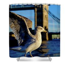 Shower Curtain featuring the photograph Gull At Tower Bridge by Judi Saunders.