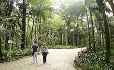 Alameda do Parque Trianon De todos os parques da cidade, o parque Trianon é o melhor para curtir sombra e brisa na região da Paulista. Com muitos bancos, árvores de folhagem densa, sempre sombreado, ele é bem diferente de alguns dos seus irmãos como o Ibirapuera. E não importa quantas vezes você entre no parque, sempre é uma surpresa encontrar um pedaço da Mata Atlântica no meio de uma das avenidas mais movimentadas do país.