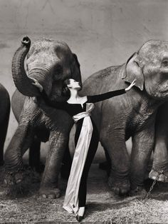 Dovima with the elephants, 1955. The dress is by Dior, but was designed by Yves Saint Laurent as an assistant to the designer he would soon succeed