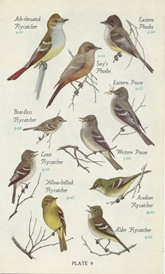 Birds--love these!