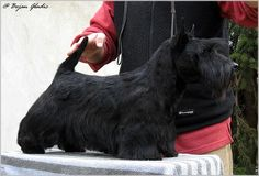 INVISIBLE TOUCH KENNEL Invisible Touch Gandalf Living in Macedonia Photo by Goran Gladic