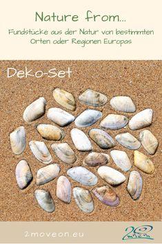 Nature from... Manta Rota, Algarve, Portugal Deko-Set - ausgewählte Muscheln zum Dekorieren, als Tischschmuck, zum Basteln oder Weiterverarbeiten 28 Stück, Größe 33 - 38 mm