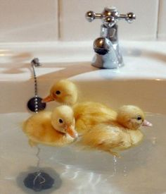 Duckies Swimming Lessons