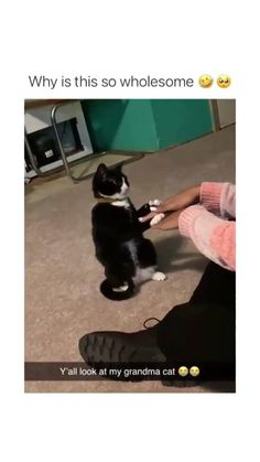 Cute Dogs And Puppies, Cute Cats And Kittens, Baby Cats, I Love Cats, Animal Jokes, Funny Animal Memes, Funny Animal Videos, Cute Little Animals, Cute Funny Animals