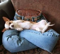 Upcycle a pair of old jeans into a Lap Pillow for your furbaby.  This is fabulous for when you are not around particularly if your dog suffers separation anxiety!