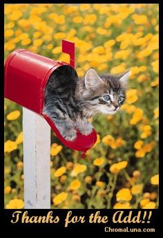 Image result for thank you for adding me as a friend cat images