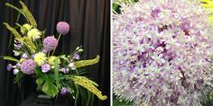 Something beautiful! Gorgeous pink allium asymmetrical arrangement complemented with purple and white varietaged lisianthus, yellow fuji mums and the texture of tall, yellow eremerus and dramatic monstera leaf. #somethingbeautiful #flowers #wmbg #williamsburgva #lovewmbg