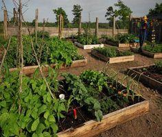 Veggie garden boxes