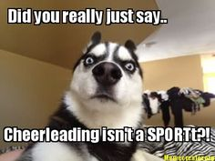 """Meme Maker - Did you just say Percabeth? Hello New Best Friend<<<< Oh my gods! this happened to me! i heard someone say Percy Jackson. """"did you say Percy Jackson? Husky Funny, Funny Dogs, Funny Memes, Funny Pix, Funny Sayings, Husky Dog, Husky Meme, Funny Videos, Funny Stuff"""