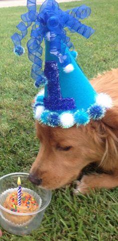 cutest pet birthday hats!!! #pets #petbirthday