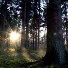 dreamies.de (zg889m1b7mv.gif) Trunks, Plants, Drift Wood, Tree Trunks, Plant, Planets