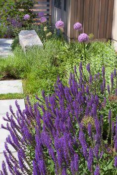 Meadow plantings rear garden Matthew Cunningham Landscape Design LLC Longwood garden