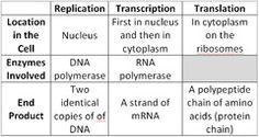 Basic explanation chart of dna replication, transcription & translation