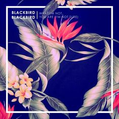 (17) I like how the title of the album is BlackBird and they have a black background and images of the plant Birds of Paradise