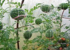 Огородко — садовод и огородник