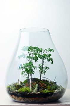 8 Beautiful Terrarium Centerpieces