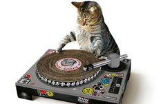 """""""All that scratchin' is making me itch!""""  Anyone can become DJ nowadays. All you need is two turntables, a mixer, and a stack of club music singles (or a USB stick). Today it was announced that actor Vin Diesel was working on his career in EDM, so clearly anyone can do it. Even a puddycat.  Thanks to the internet's love of anthropomorphic puns and a general lacking of musicianship elsewhere in the animal kingdom, now your feline friend can become the next Grandmaster Flash with this cat…"""