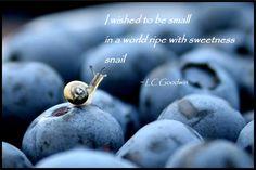 snail haiku - sweetness v.2 - LC Goodwin