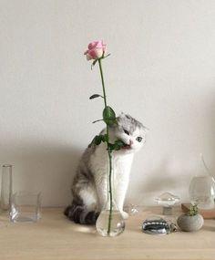 Cheeky little one | cat | cute kitty | Kawaii Pen Shop