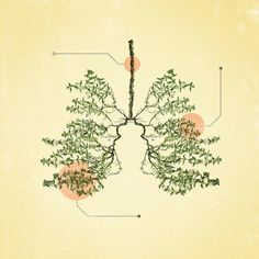 lungs / Anatomical <3