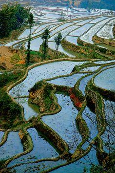 riziéres yunnan