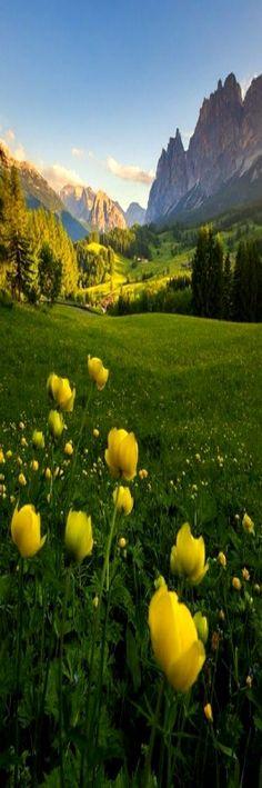 Fields of #flowers.