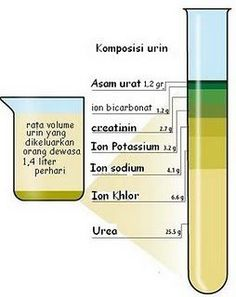 why is urine yellow 3