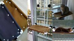Elegant-Cat-Window-Hammock.jpg (738×415)