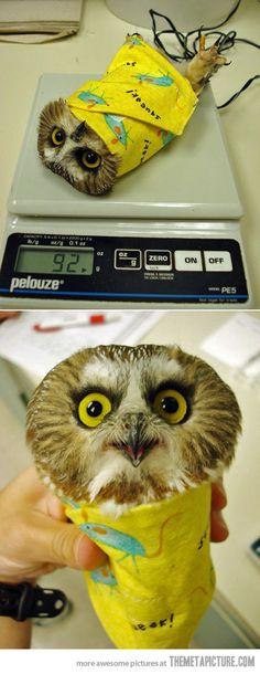 Baby Owl Burrito…