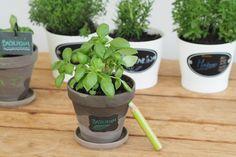 Gärtnern mit kleinen Kindern - Tipps und Tricks ⋆ Miss Broccoli Broccoli, Planter Pots, Planting For Kids, Sprouting Seeds, Earthworms, Harvest, Tips And Tricks