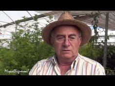 Artemisia, la planta condenada por la OMS (con Josep Pàmies)