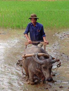 Travailler aux champs au village Mai Hich à Mai Chau.  En savoir plus : http://vivutravel.fr/mai-chau-vietnam