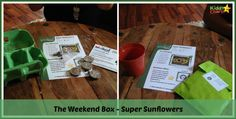 Are you stuck with activities to do with your kids - why not grow your own sunflower! #kids #gardening