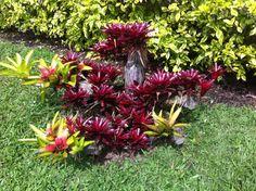 Las Heliconias de mi jardín