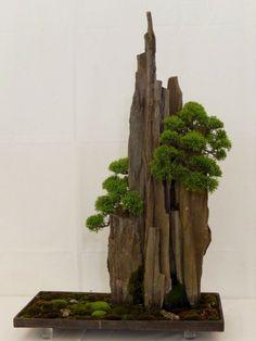 intervenção: Jose Romussi garimpa fotos de bailarinas antigas e costuras linhas coloridas em seus vestidos. Jade Bonsai, Bonsai Art, Bonsai Plants, Bonsai Garden, Garden Planters, Moss Garden, Garden Art, Island Moos, Bonsai Forest