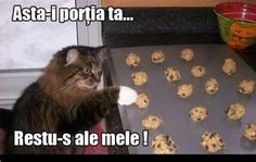 Funny Cats, Lol, Album, Memes, Cute, Funny Stuff, Photography, Funny Things, Photograph