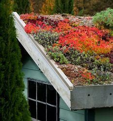 A green roof of succulents on the shed roof? Garden Design Trends Green Consciousness: Try green roofs on garages and shed, use recycled materials, buy organic and environmentally friendly products. Sedum Roof, Sempervivum, Living Roofs, Shade Trees, Rooftop Garden, Roof Design, Dream Garden, Garden Projects, Garden Inspiration