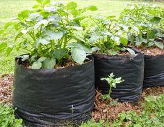 Growing Potatoes in Bags #vegetable_gardening (My-FavThings)
