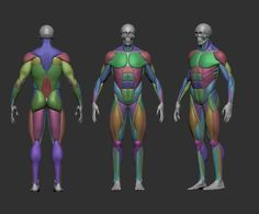 musculature simplified 3d model obj mtl stl ztl 4 Zbrush Anatomy, 3d Anatomy, Anatomy Models, Anatomy Sketches, Muscle Anatomy, Anatomy For Artists, Anatomy Drawing, Human Anatomy Art, Human Poses Reference