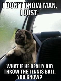 Funny Pug Pictures with Captions | sign up for the new uberhumor newsletter popular now