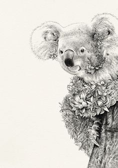 Koala Giclée Print - Australian Wildlife Collection proudly supporting the AWC II Marini Ferlazzo Animal Sketches, Animal Drawings, Art Drawings, Australian Animals, Australian Artists, Ink Illustrations, Illustration Art, Koala Craft, Koala Tattoo