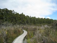 hapuka river haast visitor centre - Google Search